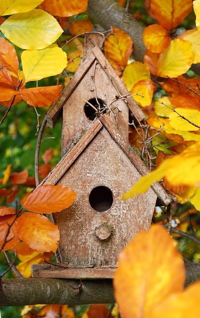 Encouraging wildlife (bird boxes) for curb appeal