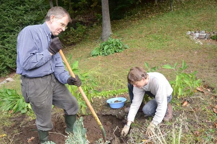 digging-up-garden
